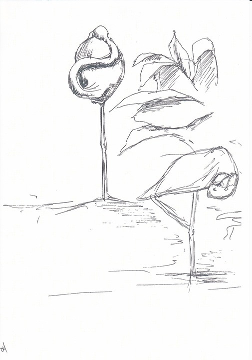 flamingos 2 sketch